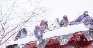 Πουλιά κάτω από το χιόνι άνοιξη Στοκ εικόνες με δικαίωμα ελεύθερης χρήσης