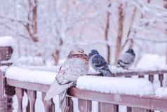 Πουλιά κάτω από το χιόνι άνοιξη Στοκ Εικόνα