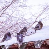 Πουλιά κάτω από το χιόνι άνοιξη Στοκ Φωτογραφίες