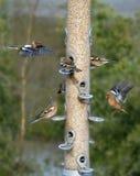 Πουλιά κήπων Στοκ φωτογραφία με δικαίωμα ελεύθερης χρήσης