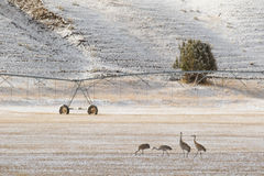 Πουλιά και άρδευση στο δυτικό αγρόκτημα στοκ φωτογραφίες με δικαίωμα ελεύθερης χρήσης