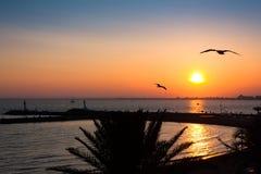 Πουλιά και ηλιοβασίλεμα σε μια παραλία LE Grau du Roi, Γαλλία Στοκ φωτογραφία με δικαίωμα ελεύθερης χρήσης