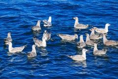 Πουλιά και μπλε νερό Στοκ εικόνες με δικαίωμα ελεύθερης χρήσης