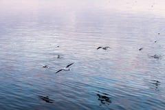 Πουλιά μετά από τη σκιά Στοκ Φωτογραφία
