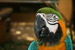 Πουλιά παπαγάλων Στοκ Εικόνα