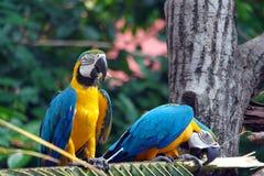 Πουλιά παπαγάλων Στοκ φωτογραφίες με δικαίωμα ελεύθερης χρήσης