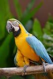 Πουλιά παπαγάλων Στοκ φωτογραφία με δικαίωμα ελεύθερης χρήσης
