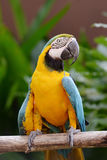 Πουλιά παπαγάλων Στοκ εικόνες με δικαίωμα ελεύθερης χρήσης