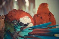 Πουλιά παπαγάλων Στοκ εικόνα με δικαίωμα ελεύθερης χρήσης