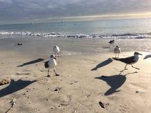 Πουλιά παραλιών Στοκ Φωτογραφία