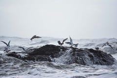 Πουλιά που επιδιώκουν το καταφύγιο στη ροδοκόκκινη παραλία Στοκ εικόνα με δικαίωμα ελεύθερης χρήσης