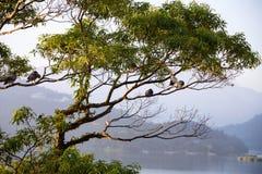 Πουλιά που κάθονται σε ένα δέντρο πέρα από μια λίμνη στοκ εικόνες με δικαίωμα ελεύθερης χρήσης