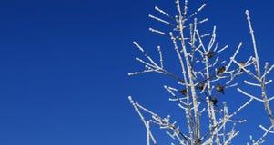 Πουλιά που κάθονται στο δέντρο Στοκ Φωτογραφίες
