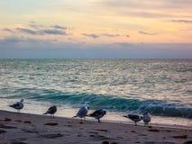 Πουλιά που κοινωνικοποιούν σε μια παραλία Στοκ Εικόνες