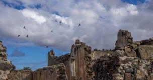 Πουλιά που πετούν πέρα από τα Κανάρια νησιά Ισπανία Λα Oliva Fuerteventura Las Palmas καταστροφών Στοκ Φωτογραφίες