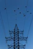 Πουλιά που πετούν στα ηλεκτροφόρα καλώδια στο ηλιοβασίλεμα Στοκ Εικόνες