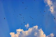 Πουλιά που πετούν στο μπλε ουρανό Στοκ Φωτογραφία
