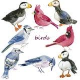 πουλιά που τίθενται watercolor Χρωματισμένη χέρι απεικόνιση που απομονώνεται στο άσπρο υπόβαθρο Στοκ Εικόνες