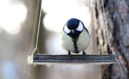 πουλιά που ταΐζουν το χ&epsilo Στοκ Εικόνες
