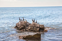 Πουλιά σε έναν βράχο Στοκ εικόνες με δικαίωμα ελεύθερης χρήσης