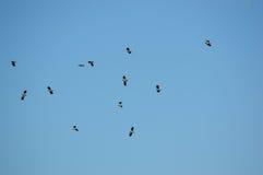 Πουλιά σε έναν σαφή μπλε ουρανό Στοκ εικόνες με δικαίωμα ελεύθερης χρήσης