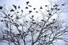 Πουλιά σε ένα δέντρο Στοκ Φωτογραφίες