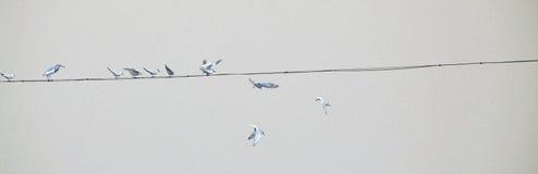 Πουλιά σε ένα ηλεκτροφόρο καλώδιο Στοκ εικόνα με δικαίωμα ελεύθερης χρήσης