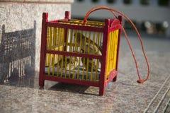 Πουλιά σε ένα κλουβί Ταϊλάνδη Στοκ Φωτογραφίες