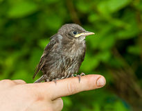 Πουλιά σε διαθεσιμότητα Στοκ Εικόνες