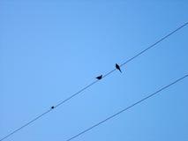 Πουλιά σε μια κινηματογράφηση σε πρώτο πλάνο καλωδίων Στοκ Φωτογραφίες