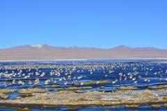 Πουλιά σε μια όμορφη λίμνη στη Βολιβία Στοκ φωτογραφία με δικαίωμα ελεύθερης χρήσης