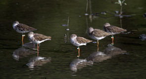 Πουλιά σε στάση Στοκ Εικόνες