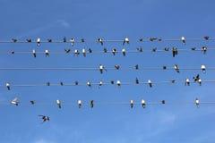 Πουλιά στα καλώδια Στοκ εικόνα με δικαίωμα ελεύθερης χρήσης