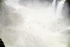 Πουλιά στην ομίχλη Στοκ Εικόνες