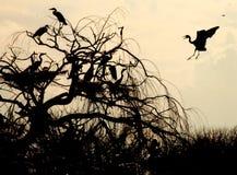 Πουλιά στη δράση Στοκ Φωτογραφίες