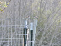 Πουλιά στη φραγή στοκ φωτογραφία