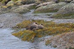 Πουλιά στη φύση Στοκ εικόνα με δικαίωμα ελεύθερης χρήσης