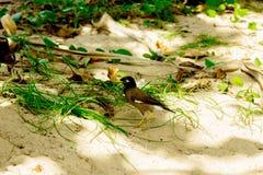 Πουλιά στη χλόη Στοκ φωτογραφία με δικαίωμα ελεύθερης χρήσης