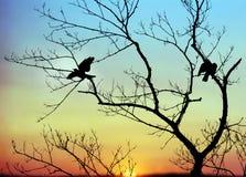 Πουλιά στη Dawn στοκ φωτογραφία με δικαίωμα ελεύθερης χρήσης