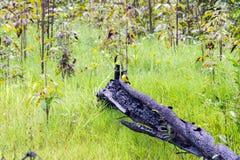 Πουλιά στις Αμαζώνες Στοκ Εικόνα