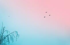 Πουλιά στον ασυννέφιαστο ουρανό Στοκ εικόνα με δικαίωμα ελεύθερης χρήσης