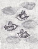 Πουλιά στον ουρανό Στοκ Εικόνα