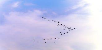 Πουλιά στον ουρανό Στοκ Φωτογραφίες