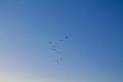 Πουλιά στον ουρανό Στοκ Φωτογραφία
