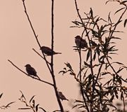 Πουλιά στο δέντρο γάτα-ιτιών Στοκ εικόνα με δικαίωμα ελεύθερης χρήσης