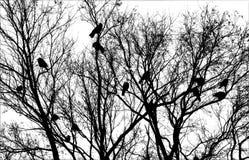 Πουλιά στο δέντρο Στοκ εικόνες με δικαίωμα ελεύθερης χρήσης
