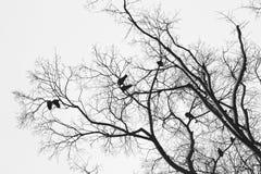Πουλιά στο δέντρο Στοκ Εικόνες