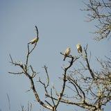 Πουλιά στο δέντρο Στοκ φωτογραφίες με δικαίωμα ελεύθερης χρήσης