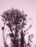 Πουλιά στο δέντρο Στοκ φωτογραφία με δικαίωμα ελεύθερης χρήσης