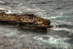 Πουλιά στο βράχος-ι στοκ φωτογραφίες